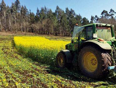 Ventajas de sembrar nabos después del maíz: El ejemplo de 3 ganaderías