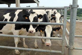 El precio de la leche toca fondo en agosto, a la espera de la posible recuperación del otoño
