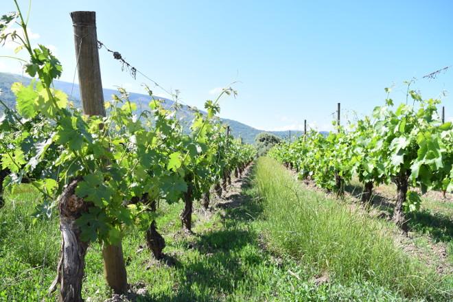 El Gobierno aprueba dar más facilidades al sector vitivinícola para acceder a ayudas