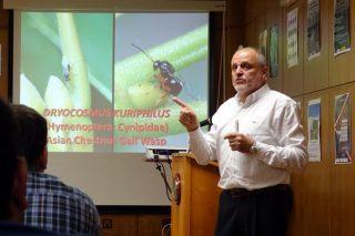 «En seis años, la lucha biológica puede resolver el problema de la avispilla del castaño»