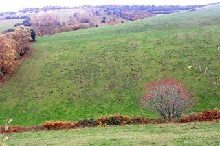 Comienza un trampeo piloto contra la rata-topo en praderas de la montaña de Lugo