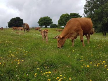 ¿Cómo afectará el Pacto Europeo Verde en las ganaderías gallegas?