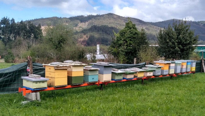 Duplicado el presupuesto de las ayudas de la Xunta a la apicultura