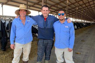 El chip gallego que monitorizará vacas en Brasil e Indonesia