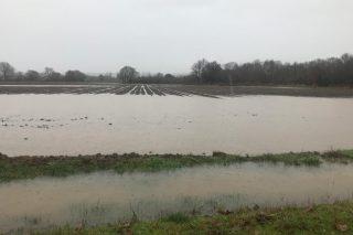 Vídeo: Graves daños en el cereal y en los cultivos de huerta de A Limia por las lluvias