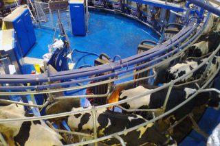 ¿Qué procedimiento se debe seguir con los residuos peligrosos de la granja?