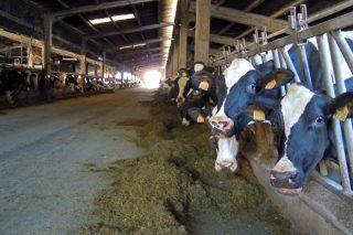 Calculan que la escalada de los piensos supone un sobrecoste mensual en las granjas gallegas de 2,7 millones de euros