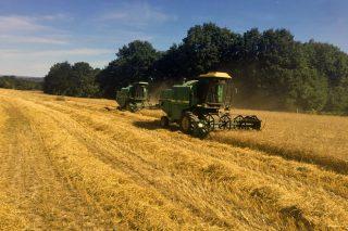 «Con cosechas por debajo de 1.200 kilos por hectárea, no compensa sembrar trigo»