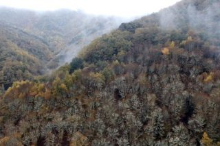 Webinar sobre certificación de productos forestales no maderables y servicios de los ecosistemas