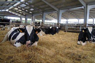 Requerimientos de las instalaciones para vacuno de leche en ecológico