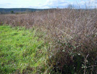 La Xunta recibe casi 1.000 solicitudes para recuperar 21.400 hectáreas de tierras abandonadas