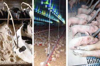 'Sanisec Plus', el secante gallego natural que es excelente para ganadería intensiva y uso ecológico