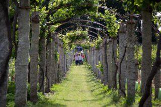 Xunta, consejos reguladores y la Fundación Juana de Vega estudian como paliar  los efectos del coronavirus en el sector del vino gallego