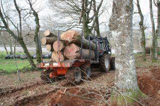 Autorizados los desplazamientos de los propietarios forestales para vender madera