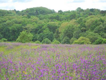 Un estudio concluye que las granjas ecológicas tienen más diversidad de aves, plantas y mariposas