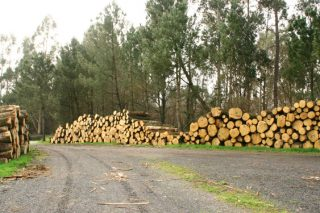 ¿Cómo está influyendo la crisis de la Covid-19 en la industria forestal?