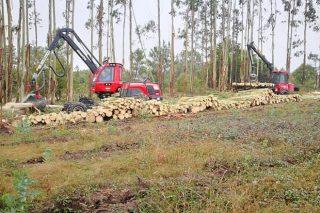 Curso en Vimianzo sobre alternativas de gestión al minifundio forestal