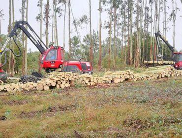 Incorporado el cálculo de secuestro de carbono de los árboles en las solicitudes de tala