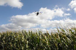 Ayudas para innovación en el sector agroganadero y forestal