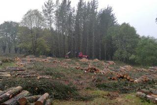Los propietarios forestales mantienen las talas, con 222,5 millones de ingresos en el 2020