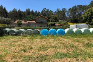 Clasificar las bolas de silo de hierba según su valor nutricional, una forma de abaratar la ración
