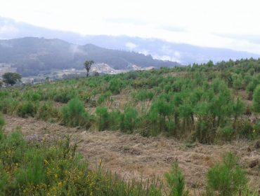 El monte vecinal de O Viso impulsa un proyecto de absorción de dióxido de carbono