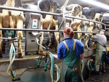 ¿Qué se puede hacer para mejorar la gestión del personal de la granja?