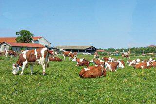 Praderas en Francia altamente productivas y resistentes a la sequía