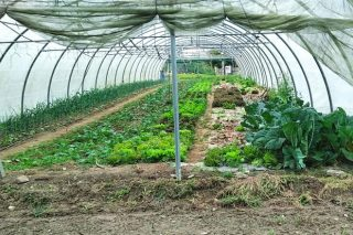 Curso de iniciación a la producción de cultivos alternativos en la huerta