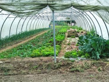 Curso de huerta y preparados ecológicos