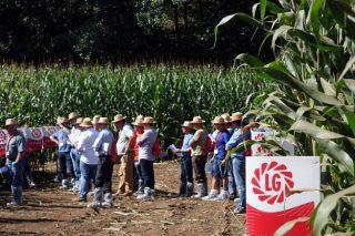 LG, semillas de maíz que responden a las necesidades de los ganaderos