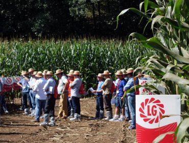 LG Starcover, semillas de maíz potenciadas por dos bioestimulantes