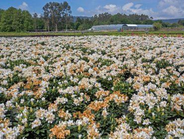«La campaña de planta ornamental está perdida, tenemos ya millones de euros en pérdidas»