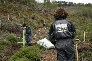 Plantados 55.000 árboles autóctonos para mejorar el hábitat del oso en O Courel