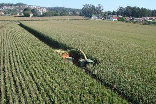 Syngenta semillas de maíz: Siempre investigando y desarrollando