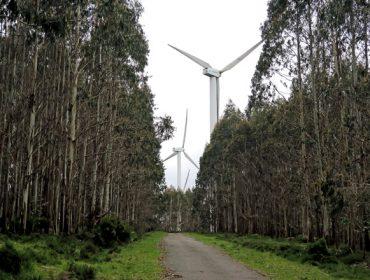 La Xunta anuncia que el Plan Forestal de Galicia reducirá un 5% la actual superficie de eucalipto