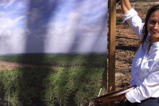 """""""La madera de pino se convertirá en un recurso escaso con elevada demanda"""""""