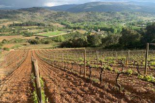 Las bodegas de Valdeorras se reinventan para superar el descenso de ventas provocado por el coronavirus