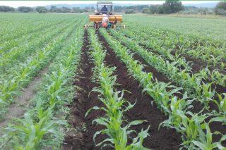 Curso sobre fertilización ecológica del maíz y de las praderas