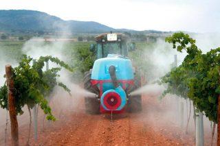 Claves en el uso del azufre en la viticultura: cuándo y cómo aplicarlo