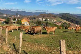 La Comisión Europea focaliza en la ganadería su cruzada contra las emisiones agrícolas