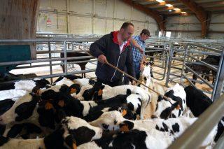 Se retoman la próxima semana los mercados de ganado de Amio, Silleda y Castro Riberas de Lea