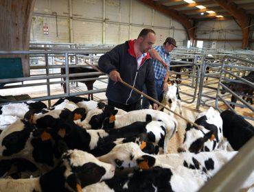La feria de Silleda comienza a operar como punto de concentración de ganado para los tratantes