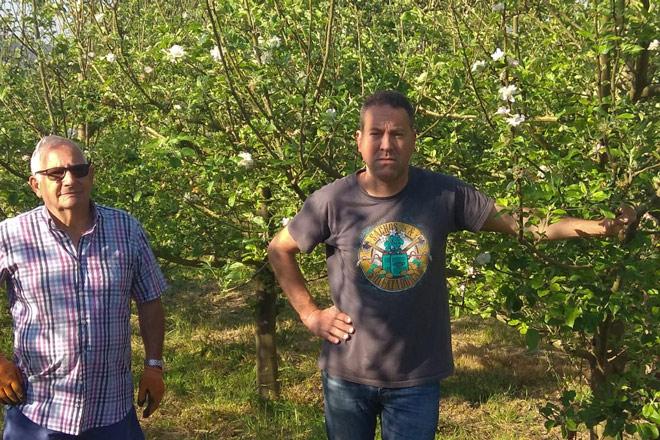 Una cosecha de manzana de sidra de récord en tierras de Narón: 45 toneladas por hectárea