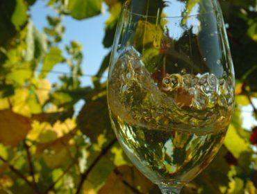 El vino blanco con Denominación de Origen es el que más incrementa su consumo en los hogares de España