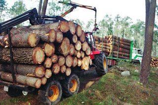 Precios de adjudicación de la madera en las subastas de la Xunta
