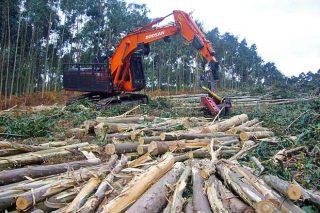 El sector forestal se recupera tras la bajada de la facturación por la crisis de la Covid