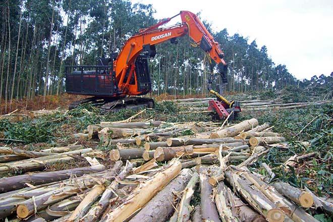 Nuevo ciclo medio de FP dual de Técnico en Trabajos Forestales en Ribadeo