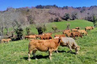 El sector del vacuno de carne lanza la estrategia 'Carbono Neutral 2050'