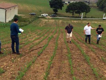 """Terdim controla un amplio espectro de malas hierbas en maíz con alta persistencia"""